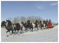 Free Sleigh Rides @the Calnash Ag Centre on Dec. 31, 2016