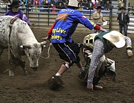 Bucking Bash 2014 - Photo courtesy of Ponoka News