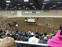Top Gun Horse Sale 2014